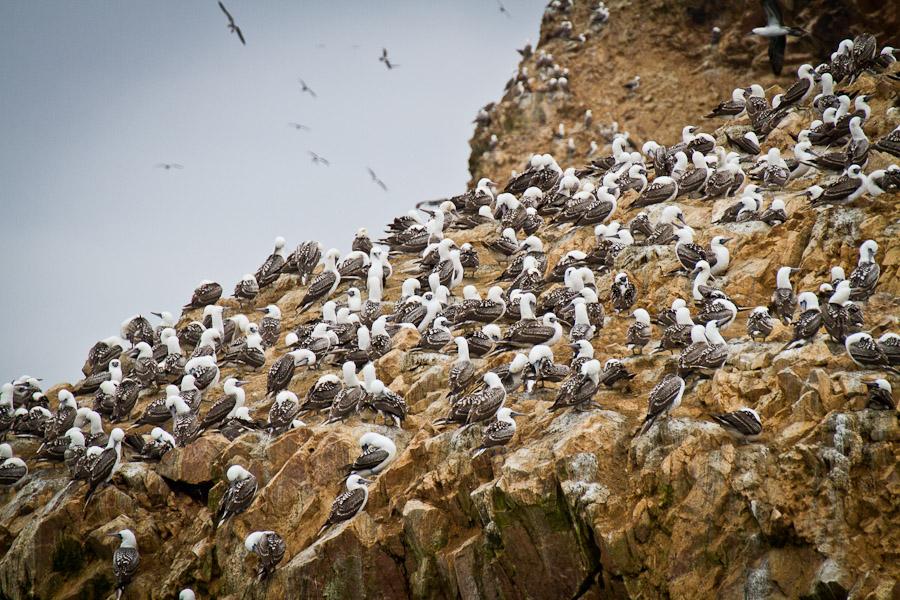 Perù e Bolivia - Islas Ballestas