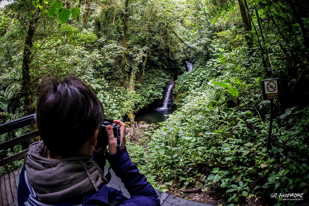 Trekking nella foresta nebulare